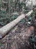delito forestal
